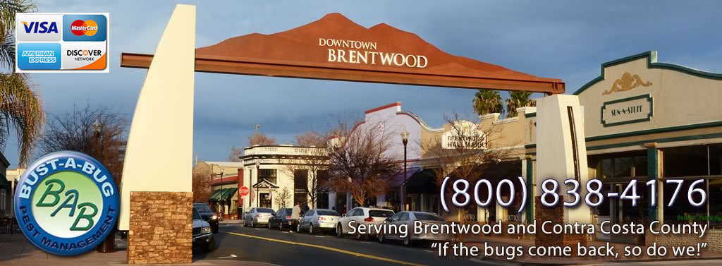 Portal to Downtown Brentwood, California with wording: Bust-A-Bug Pest Control. Serving Brentwood and Contra Costa County, 800-838-4176