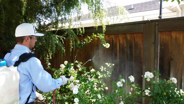 A man spraying for bugs on the outside of a home in Brentwood, California.